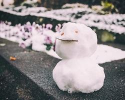 サンルームやテラス屋根に雪が積もった場合はどうしていますか?
